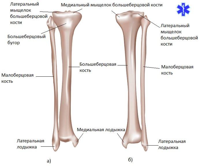 хламидии воспаление суставов
