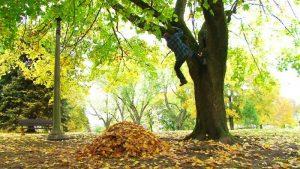 Падение с дерева - причина вывиха руки
