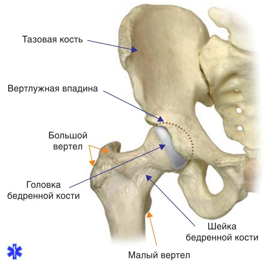 Закрытый перелом головки тазобедренного сустава массаж плечевого сустава после вывиха