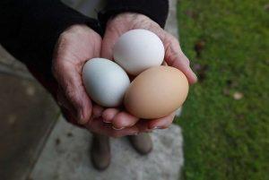 Особенности отравления яйцами