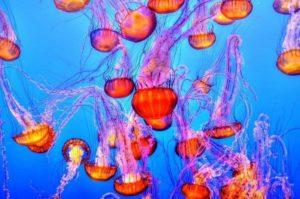 Особенности укуса медузы