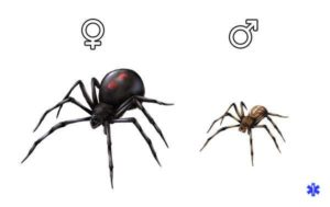 Чем отличается самка от самца