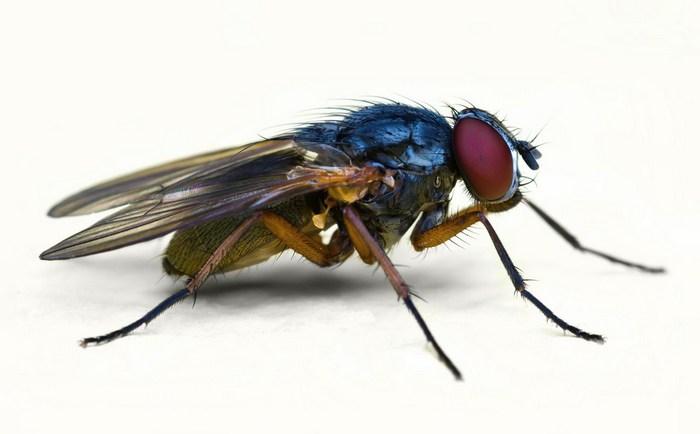 Особенности укуса мухи