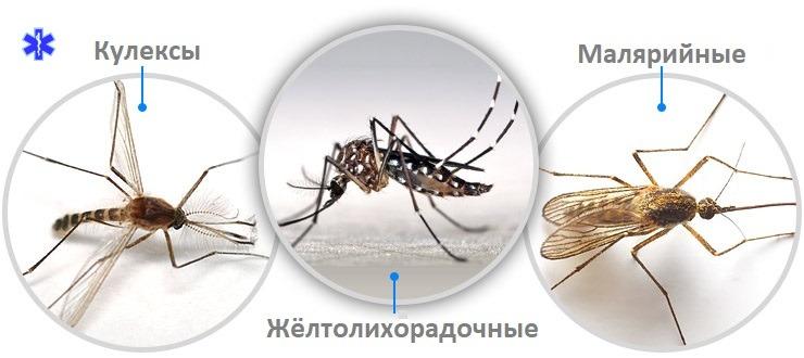 Разновидности комаров