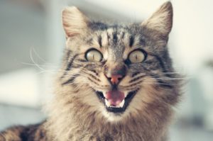 Особенности укуса кошки