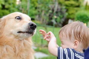 Собака способна укусить ребенка если тот дразнит