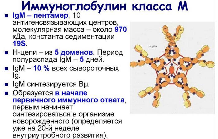 Иммуноглобулин класса м